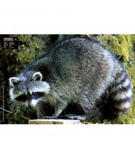 Maximal - Cible animalière Raton Laveur